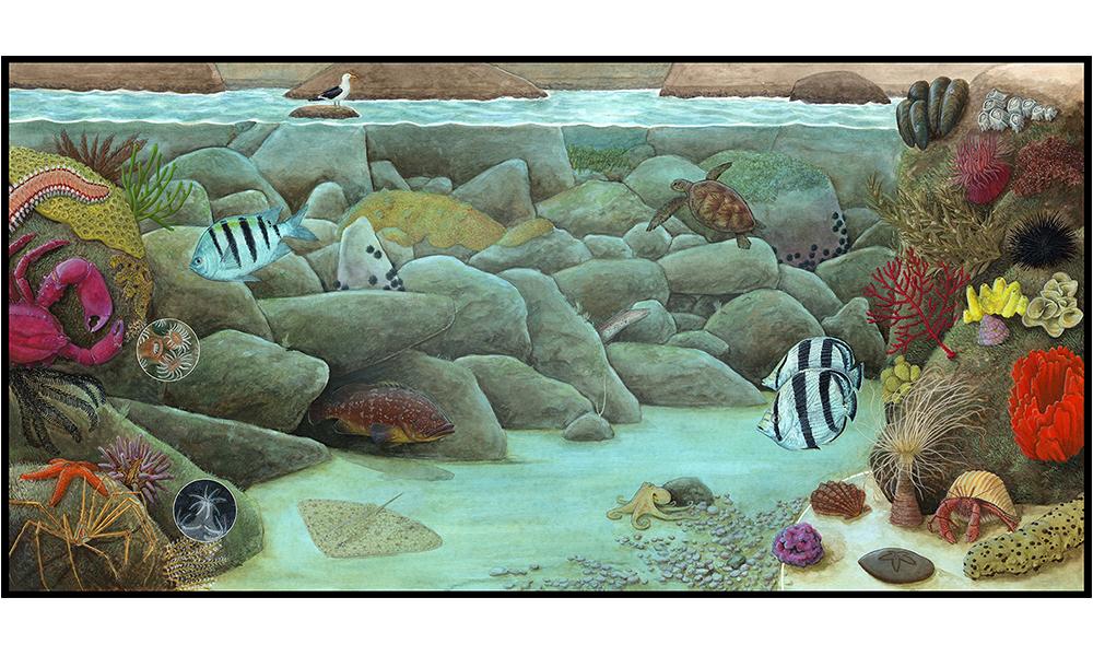 Diversidade Reserva Biológica do Arvoredo