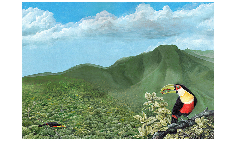 Tucano na Serra do Tabuleiro