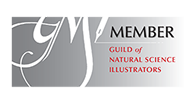 The Guild of Natural Science Illustrators